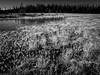 Frostwork (Fjällkantsbon) Tags: nature mono march frost lappland reserve lapland rime bog mire myr naturreservat frostwork rimfrost blaikfjället evamartensson långmyran