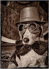 Steampunk Pooch (Paguma / Darren) Tags: dog goggles hound floyd steampunk