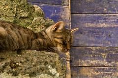 IMG_5293 (Yarin del Vecchio) Tags: colors cat sleep sleepy calcata