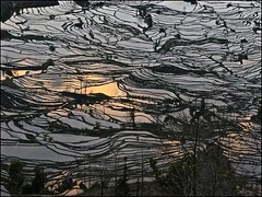 Gold & Silver (Christian Lagat) Tags: china reflections terraces 中国 yunnan paysage reflets lanscape chine paddyfield rizières yuanyang 云南 terrasses unworldheritage patrimoinemondialdelunesco laohuzui 元阳县 sonynex6