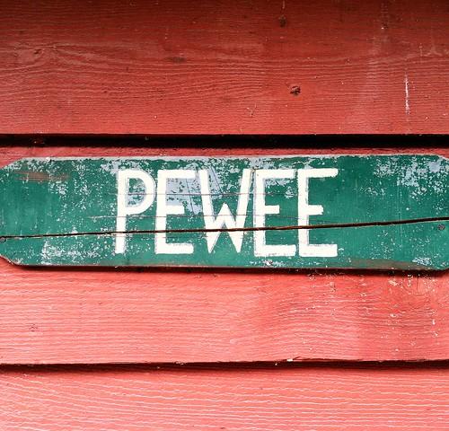 Pewee