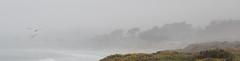 Pacific Landscape (daniele paccaloni) Tags: ocean california sea nature water fog zeiss landscape mar agua pacific norcal nebbia acqua niebla pacifico paesaggio ze oceano aposonnart2135 aposonnar1352ze