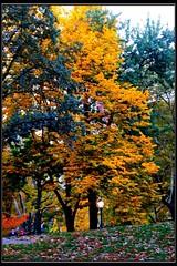 Autumn In Central Park NY (lelobnu) Tags: city autumn newyork fall colors centralpark manhattan streamzoo