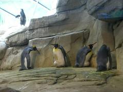 Berlin - Zoologischer Garten (Seesturm) Tags: berlin animals germany zoo tiere europa hauptstadt tiergarten zoologischergarten pinguine bundeshauptstadt 2013 seesturm