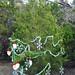 Trees_of_Loop_360_2013_032