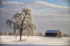IMG_6321 (Nature's Angle) Tags: snow tree barn frozen snowstorm puremichigan naturesangle