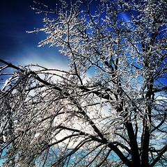 Blue Crystal (Irina Souiki) Tags: winter storm ice square frozen lofi squareformat brampton iphoneography instagramapp uploaded:by=instagram