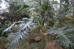 (ddsnet) Tags: plant sony taiwan cybershot  taoyuan    rx10 851