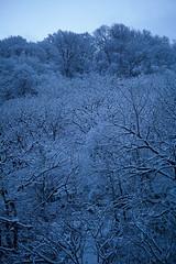 Winter morning (kabtan) Tags: snow tree japan sigma  niigata  foveon joetsu  dp3 dp3merrill