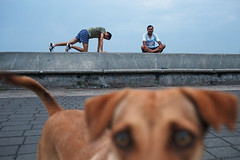 Morning Dog - Mumbai, India (Maciej Dakowicz) Tags: morning dog india animal sport exercise promenade bombay activity mumbai fit marinedrive exercising narimanpoint seapromenade