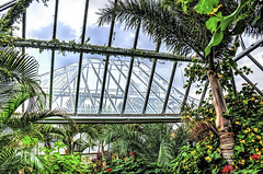 Inside Looking Out (Wes Iversen) Tags: flowers trees palms blossoms greenhouses chicagobotanicgarden odc hcs tonemapping tonemap nikkor18300mm ourdailychallenge clichsaturday