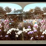 TWO GEISHA IN THE HORIKIRI IRIS GARDENS of Old TOKYO, JAPAN thumbnail