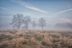 foggy Landscape (Martine Lambrechts) Tags: foggy landscape tree sky morning nature
