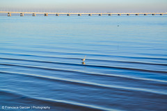 Lonely (Francisca Garcias - Photography) Tags: nikon d3100 water wild bird bridge vascodagama portugal colors waves