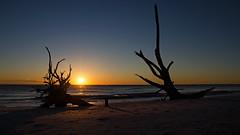 Cast Aside DSL6175 (iloleo) Tags: sunset loverskey driftwood colourful beach nature landscape florida nikond7000 scenic