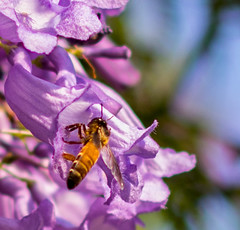 Sipping nectar (ReDnAx1991) Tags: bug bokeh canon 80d canon80d india bangalore bengaluru lalbagh botanic
