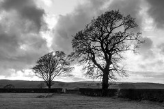Black and White (Peter D Middleton) Tags: sillouette trees tree clouds lune valley kirkby lonsdale burrow landscape light dark sky lancashire