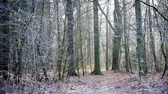 *** (pszcz9) Tags: polska poland przyroda nature natura las forest zima winter grudzień december pejzaż landscape forestimages mgła fog poranek morning ścieżka path drzewo tree beautifulearth sony a77