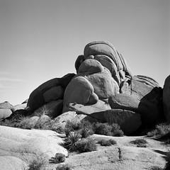 Joshua Tree National Park (ASHLANDJET) Tags: film roleiflex35e ilfordxp2 mediumformat 120 square 6x6 blackandwhite monochrome desert joshuatree california epsonv500 vintagecamera tlr analog
