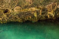 Tulum Pet Cemetary Cenote cave-9