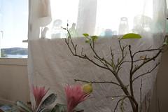 (Beathe) Tags: sando home low sun temporary curtain sheet solskjerming vases windowstill img1802