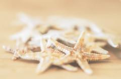 she sells (rockinmonique) Tags: mini miniature seashells starfish golden gold bokeh light texures moniquew canon canont6s tamron copyright2017moniquew