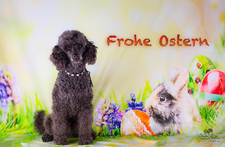 Frohe Ostern/ Happy Easter Explore #48
