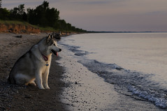 Peanut at the Pinery (craig_schenk) Tags: beach dog pets sunset canada