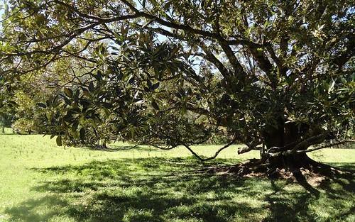1125 Green Pigeon Road, Kyogle NSW 2474