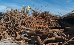 Pier 96 Zaccor Demolition 3-2017 (daver6sf@yahoo.com) Tags: pier96 p96 portofsanfrancisco salvage zaccor steel rust recycle excavators
