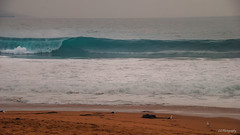 Treading water (.KiLTRo.) Tags: viñadelmar regióndevalparaíso chile kiltro beach sand seagull sea ocean green water wave