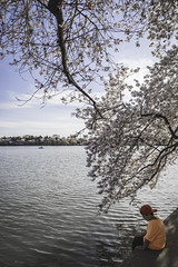 Sitting and Watching (Mark Alan Andre) Tags: dc washington washingtondc blossom blossoms cherry cherryblossoms flower trees
