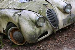 Jaguar (Mettwoosch) Tags: car old oldtimer jaguar autoskulpturenpark autofriedhof neandertal erkrath nrw europe europa deutschland germany outdoor canon eos 5dm3 ef lens 5d3 travel trip tour lost