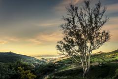 Entre dos mundos (picscarpemi) Tags: amanecer ceuta landscape naturaleza paisaje rinconesdeceuta trees treeporn árboles sky nature marruecos morocco