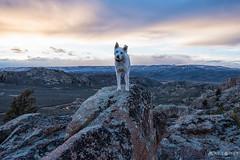 IMGP1036-Edit (Matt_Burt) Tags: dog hartmanrocks lichen luna rocks sunset view walk
