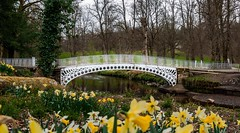 Halfpenny Bridge, Linn Park (Kai Hannah) Tags: daffodils water park panasoniclumix lumix panasonic photography photo bridge halfpennybridge linnpark