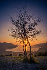 Tree stories (Vagelis Pikoulas) Tags: sun sunset sunburst march spring 2017 porto germeno greece tree sea seascape landscape canon 6d tokina 1628mm view sky blue