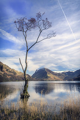 Lone Tree Buttermere (RenaldasUK) Tags: buttermere england cumbria canon lakedistrict canon6d vertical sky