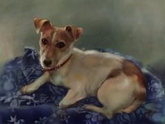 Xena 5 (amam00n) Tags: art jackrussell terrier ipad procrate