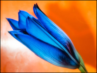 2017-092 Blue and Orange