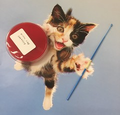 Micro Kitty (ddsiple) Tags: microbiology cat
