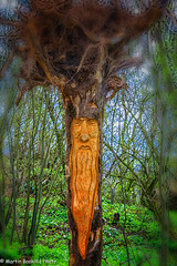 Old Man of the Wood (martin.baskill) Tags: 2017 march woodland carving trees ethereal derbyshire beard