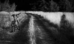 on the way (Andreas Höschel) Tags: fahrrad genthin jerichowerland sachsenanhalt deutschland germany giant feld weg way 85mm walimex a7 sony abend sonne licht schatten
