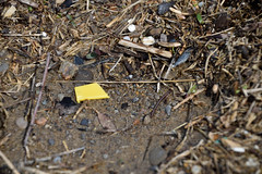 Yellow Bit (Bad Alley (Cat)) Tags: garbage trash litter refuse earthday pollution plastic colour colours color colors beach lake yellow