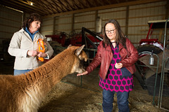 medina-7683 (FarFlungTravels) Tags: alpaca animal farm medinacounty onefineday shear wool