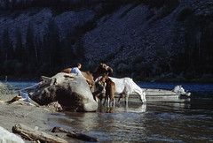 Tuva - i cavalli (Alberto Cameroni) Tags: kodak kodak5017epr e6 film primefilm analogic analogico rusia russie russland diapositiva nikon siberia rossija russia tyva tuva yenisei cavalli nikonfm2