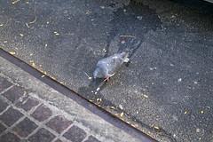_DSF0084 Pigeon (CoriJae) Tags: hdr waterstreet downtownmanhattan newyork
