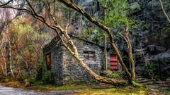 Vivian quarry ( in explore ) (Einir Wyn Leigh) Tags: llanberis landscape quarry waes trees colour atmosphere outside outdoor orange gold green foliage cymru history industry rural woods