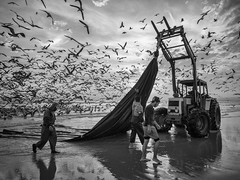 "Fisherman's and Seagulls"" (josaraujo) Tags: seagulls fishermans clouds beach sunset fishing bw blackwhite blackandwhite monochrome reflection birds ocean atlantic sea costadacaparica portugal olympuseurope olympus getolympus esolympus em1 mzuiko1240f28"