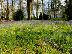 20170415_145101 (dkmcr) Tags: ruffordoldhall nationaltrust tudor heritage history lancashire daytrip attraction tourist rufford 15th april 2017 landscape scenery